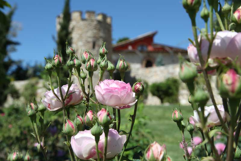 Giardino italiano etrusco rose inglesi rose antiche del