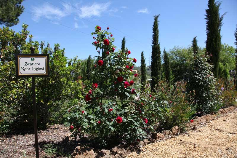Giardino italiano etrusco rose inglesi rose antiche for Rose inglesi