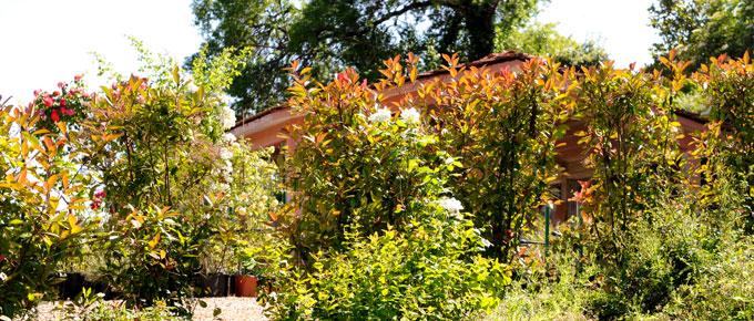 Giardino italiano etrusco rose inglesi rose antiche del laghetto mediterraneo ombroso - Il giardino di elizabeth ...